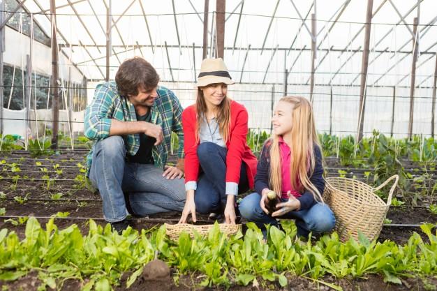 Zniesienie współwłasności gospodarstwa rolnego: podział rzeczy wspólnej, sprzedaż, dopłaty, spłaty i przyznanie na własności