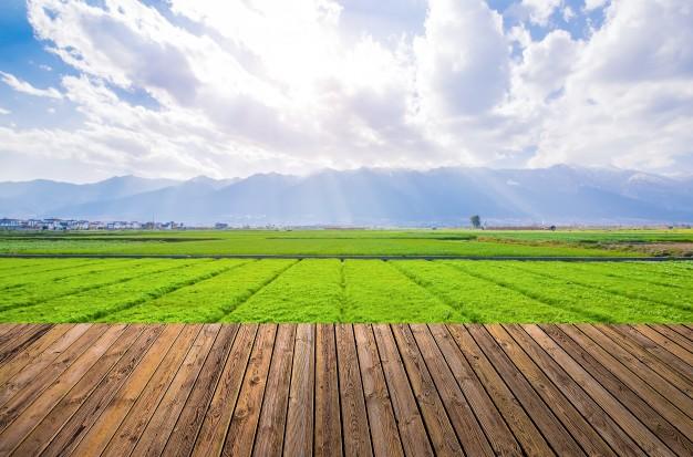 Nierówne udziały w majątku wspólnym przy podziale majątku małżonków prowadzących gospodarstwo rolne