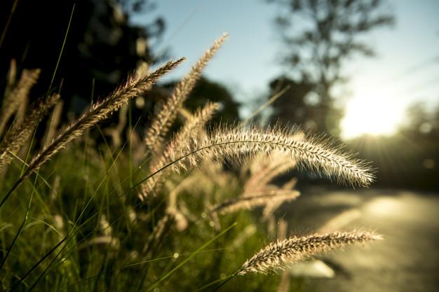 Podział majątku Rodzinnego Ogrodu Działkowego ROD po rozwodzie