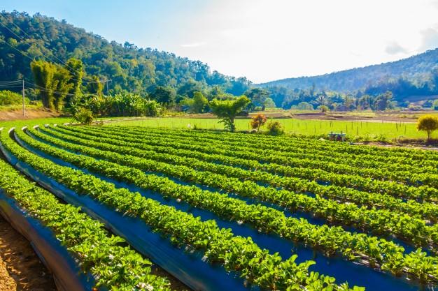 Podział majątku i rozliczenie dopłat unijnych do gospodarstwa rolnego otrzymanych po rozwodzie